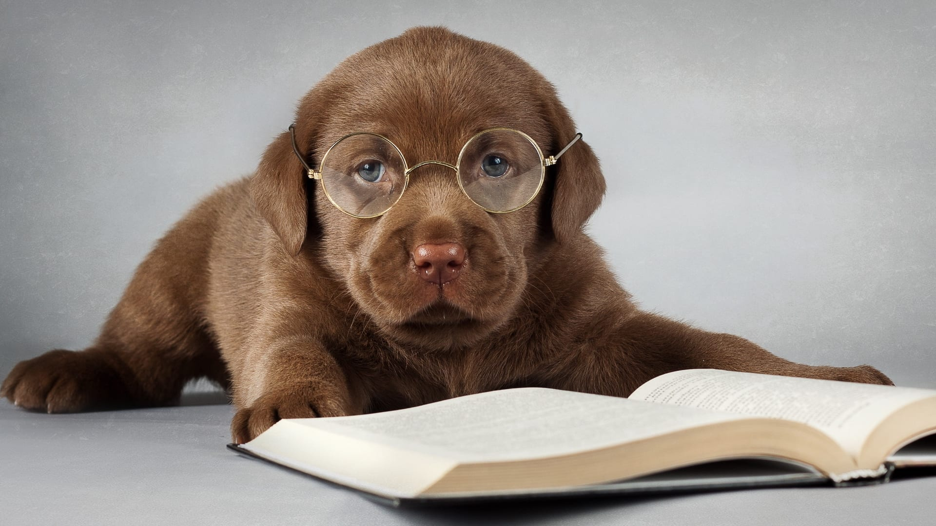 Studying?